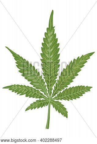 Isolated Leaf Of Cannabis On A White Background. Marijuana As A Medicine. Suitable For The Design Of