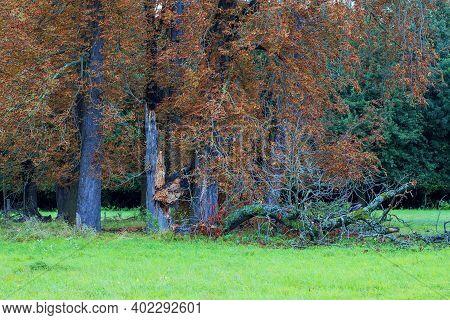 Old Fallen Soliter Trees On A Green Field