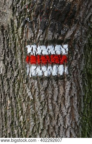 Tourist Sign Painted On The Bark Of A Tree In The Czech Republic.