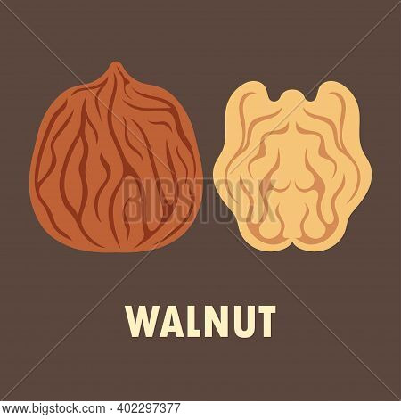 Walnut Vector Illustration Isolated On Brown Background, Nut In Cartoon Style, Flat Design, Whole Un