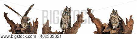 Collage With Photos Of Beautiful Eagle Owl On White Background. Banner Design