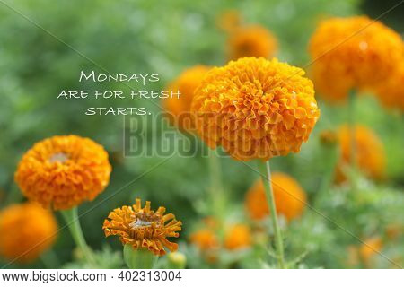 Monday Motivational Quote - Mondays Are For Fresh Starts. Inspirational Words Concept With Nature Ba