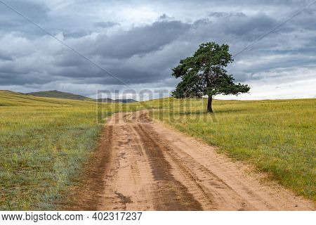 A Lonely Tree By The Road Against The Backdrop Of Endless Fields And Hills On Cloudy Summer Day On O