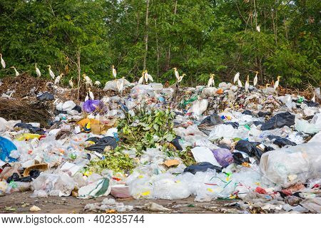 Foraging Birds Garbage Dump Pile In Trash Dump Or Landfill And Treebackground,backhoe And Truck Is D