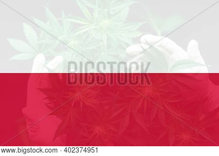 Medical Cannabis In The Poland. Cannabis Legalization In The Poland. Leaf Of Cannabis Marijuana On T
