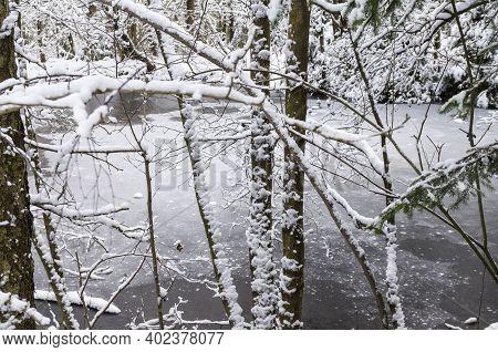 Gefrorener See Im Winterwald, Januar Im Harz