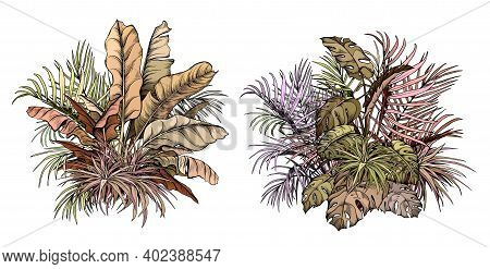 Colorful Tropical Palm Foliage. Rainforest Scenery. Hand Drawn Vector Illustration Isolated On White