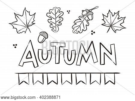 Fall Maple And Oak Leaves, Acorns. Autumn Coloring. Elements For Seasonal Calendar. Hand-drawn Doodl