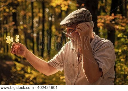 Curiosity To Botany. Explore World Around. Pensioner Hiking In Forest On Sunny Autumn Day. Old Man C