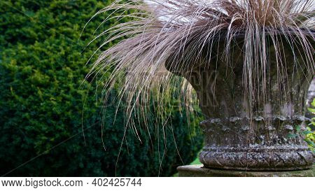 Decorative Urn With Ornamental Grasses Cascading From Planter With Copyspace