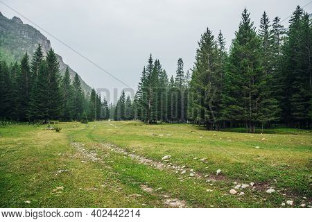 Atmospheric Green Forest Landscape With Dirt Road Among Firs In Mountains. Scenery With Edge Conifer