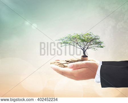 Invest Fund Concept: Businessman Hand Holding Big Tree And Stack Of Coins Over Blurred Nature Backgr