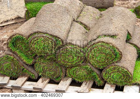 Rolled Turf On Pallets For Laying A Fresh Green Turf