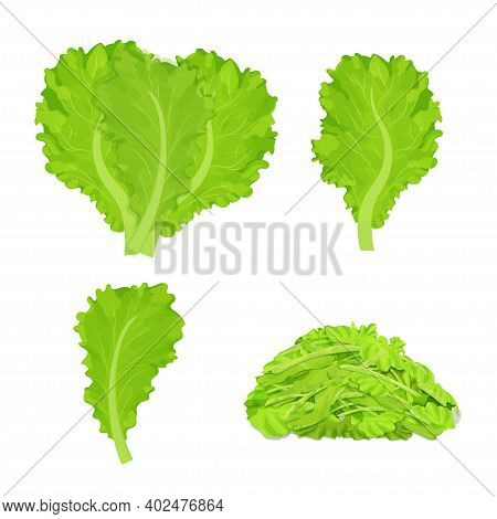 Set Os Lettuce Leaves, Chopped Pieces, Detailed Drawing In Bright Cartoon Style Isolated On White Ba