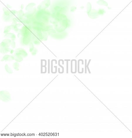 Green Flower Petals Falling Down. Grand Romantic Flowers Corner. Flying Petal On White Square Backgr
