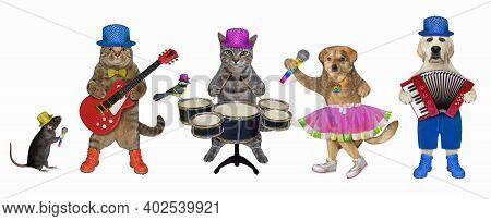 Pets Play The Drums, The Acoustic Guitar, The Accordion And Sing A Song. White Background. Isolated.
