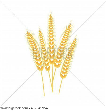 Spikelets Of Wheat. Whole Stalks. Spikelets With Grains.