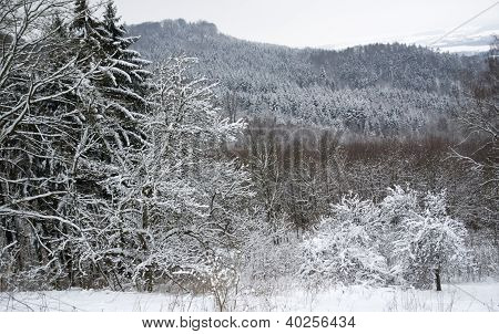 Snowy Forest Detail