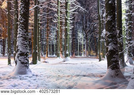 Winter Snowy Trees In Forest Park At Night. Lights In Winter Park. Amazing Nature Landscape In A Cit
