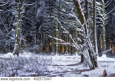 Winter Forest At Night. Snowy Trees. Christmas Time Scene In City Park.amazing Trees Covered By Hoar