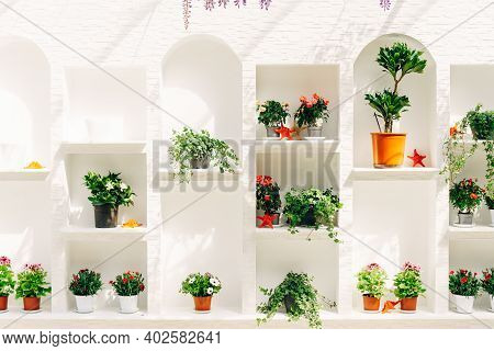 Floral Showcase With Flowers In Pots. Rack For Flowers In The Interior.