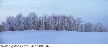 Panoramic view of frost on trees during winter morning