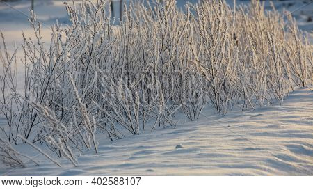 Close up shot of plants with morning winter frost