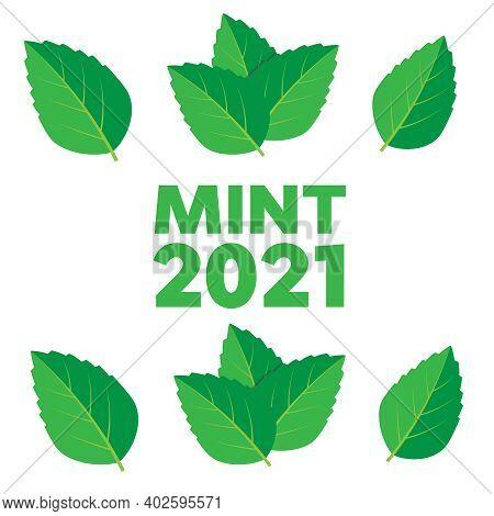 Leaf Herbal Spearmint Plant. Mint Leaf Vector Illustration