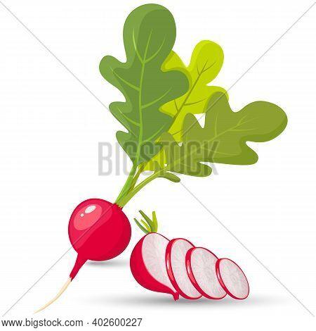 Radish. Radish Slices. Set Of Ripe Radishes. Flat Style. Vector Illustration On White Background