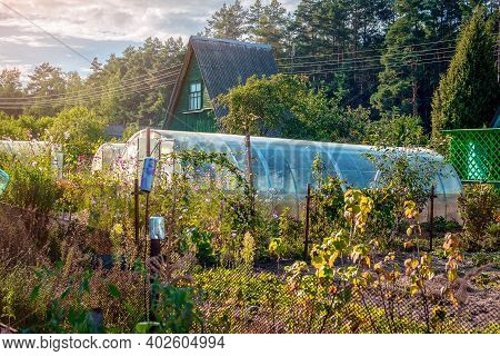 The Picturesque Evening Countryside Landscape Of A Country House With A Garden Plot And Greenhouses
