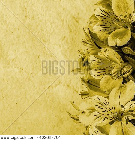 Layout For A Greeting Card. A Bouquet Of Beautiful Yellow Orchids On A Light Background. Mocap, Blan