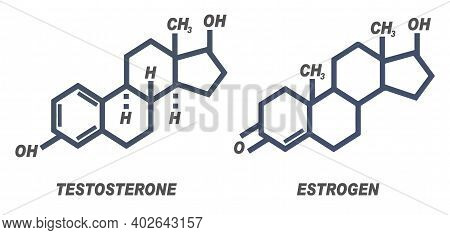 Vector Illustration Of Chemical Formula For Male And Female Hormones Testosterone And Estrogen