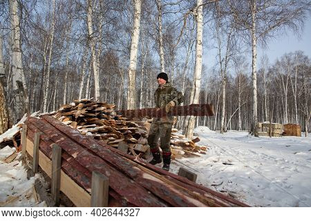 A Logger Saws A Tree In The Forest In Winter, In Russia For Firewood