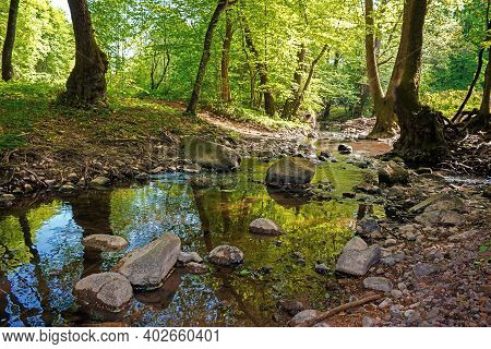 Wild Water Stream In The Forest. Beautiful Nature Scenery On A Sunny Spring Day. Trees In Vivid Gree