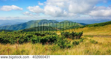 Mountain Landscape On A Bright Summer Day. Meadow In Grass And Plants On The Hill. Wonderful Weather