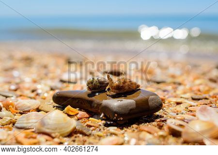 Two Small Shells With Live Crustaceans Lie On A Stone Against The Background Of The Sea. Focusing On