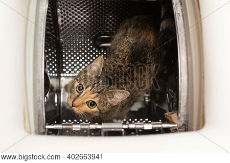 The Cat Has Eyes Wide Open And Is Looking Up From Inside The Washing Machine. The Short Hair Is Dark