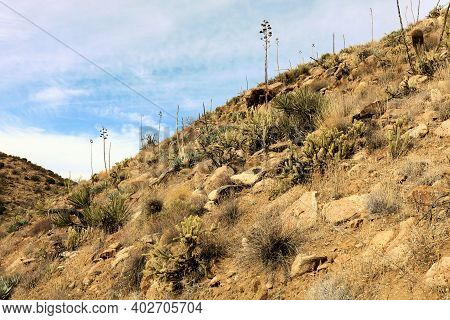 Arid Hillside With Cacti And Chaparral Shrubs Taken At The Mojave Desert In The Rural Southern Calif