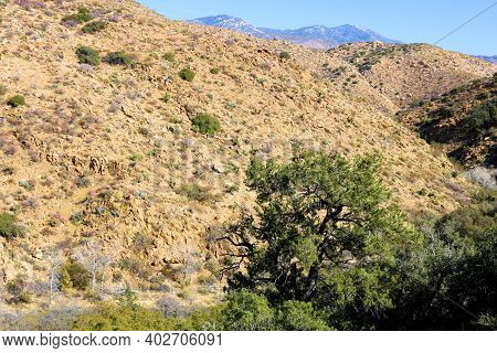 Arid Mountains With Pinyon Pine Trees Overlooking A Canyon Taken On Rural Badlands At A Chaparral Wo