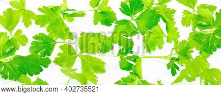 Chopped Parsley Leaves Isolated On White, Closeup. Fresh Parsley Herb Pattern