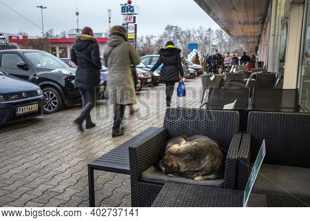 Pancevo, Serbia - March 8, 2020: Lutalica, A Typical Serbian Stray Dog Stray Dog Sleeping At The Ter