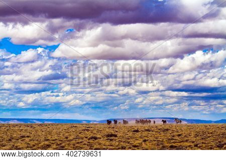 Herd of gorgeous mustangs rides on the prairies. Cumulus clouds covered the sky. Los Glaciares is Argentina's most beautiful natural park