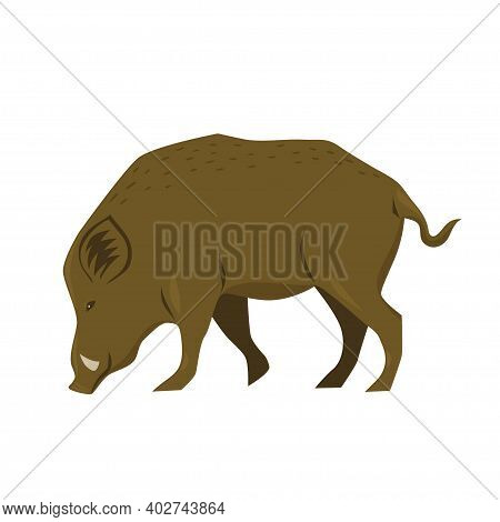 Wild Boar Isolated On White Background. Vector Image.