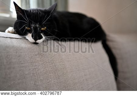 Cat Lying On The Backrest Of A Sofa