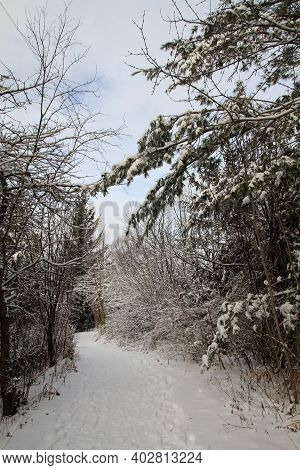 The Winter Landscape With Trail In Forest