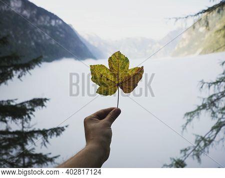 Hand Holding Acer Yellow Orange Autumn Fall Season Pseudoplatanus Sycamore Maple Leaf Mountain Panor