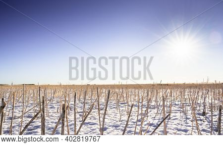 Crop Stubble On Harvested Farmland On The Canadian Prairies In Rocky View County Alberta Canada.
