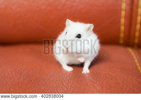 Homemade Hamster, Cute Home Rodent.