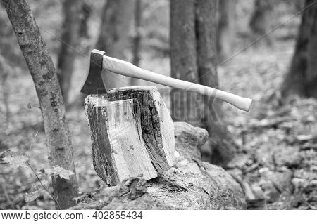 Split And Cut. Large Axe In Stump. Splitting Axe On Natural Landscape. Lumbermans Equipment. Tree Ch