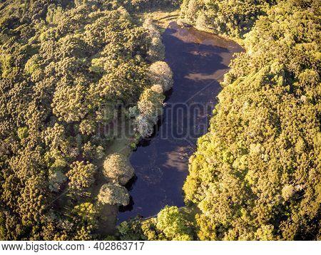 Araucaria Forest Around A Lake